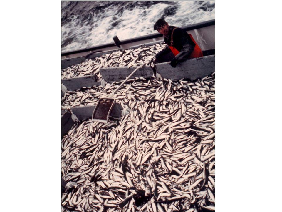 Was können die Fischer tun.