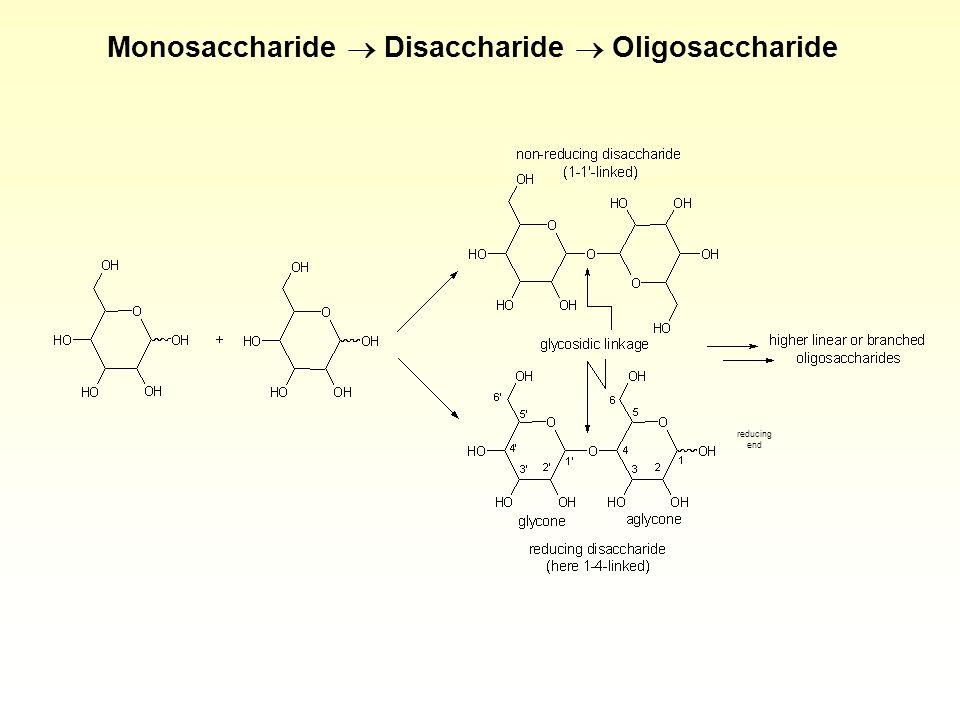 Monosaccharide Disaccharide Oligosaccharide reducing end