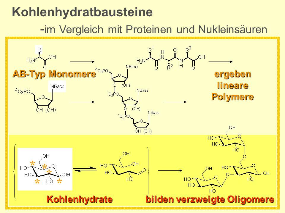 Kohlenhydratbausteine - im Vergleich mit Proteinen und Nukleinsäuren ergeben lineare Polymere AB-Typ Monomere bilden verzweigte Oligomere * * * * * Ko