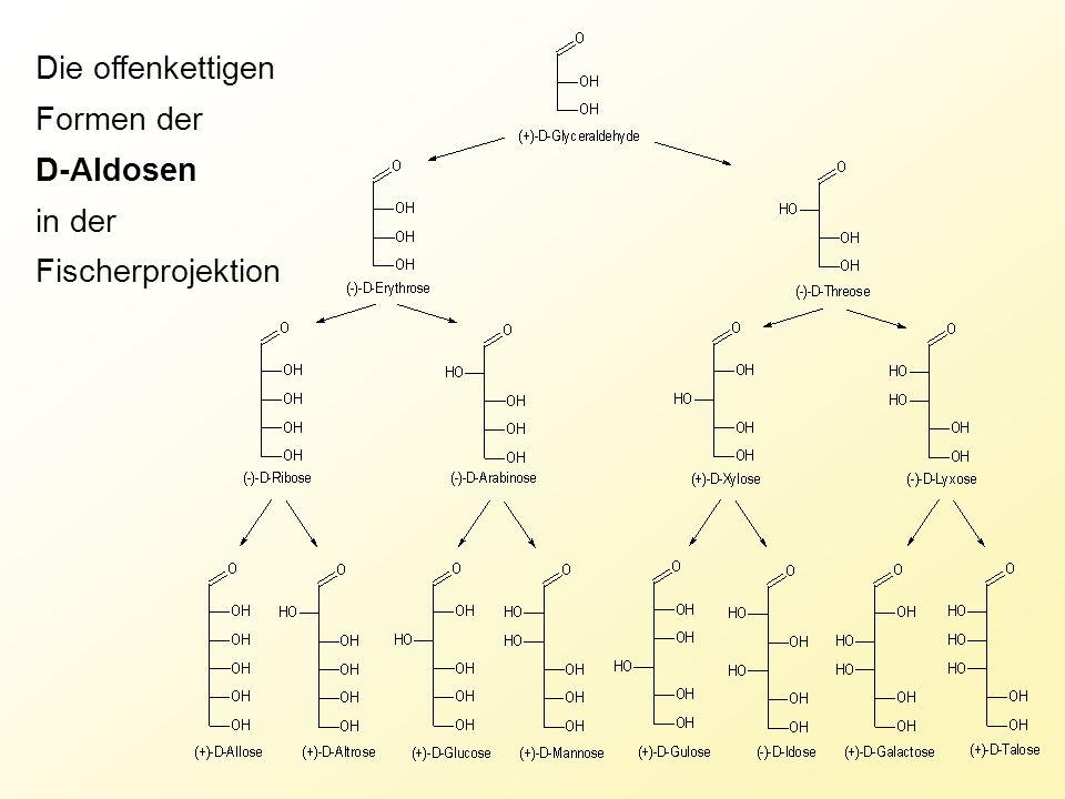 Die offenkettigen Formen der D-Aldosen in der Fischerprojektion