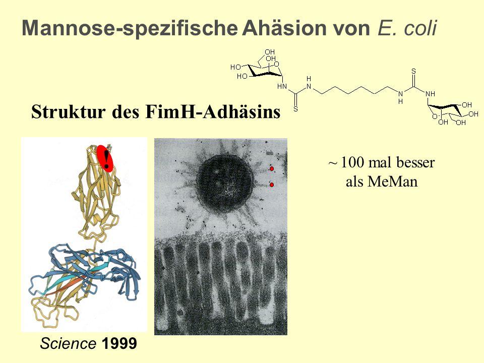 Mannose-spezifische Ahäsion von E. coli Struktur des FimH-Adhäsins ~ 100 mal besser als MeMan Science 1999 !