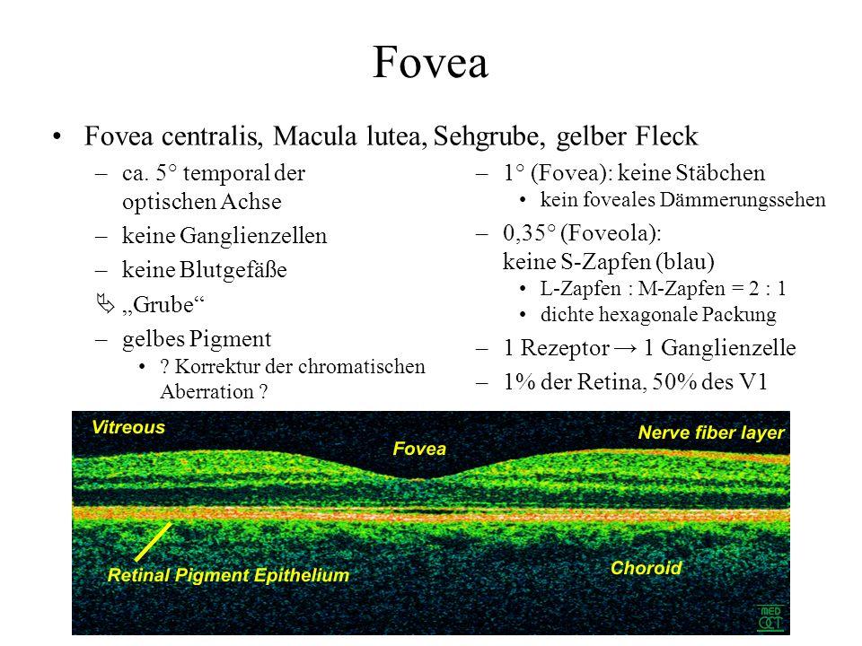 Fovea Fovea centralis, Macula lutea, –ca.
