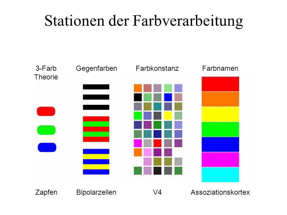 Stationen der Farbverarbeitung 3-Farb Theorie GegenfarbenFarbkonstanzFarbnamen ZapfenBipolarzellenV4Assoziationskortex