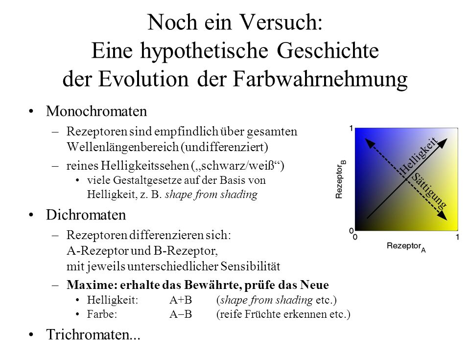 Noch ein Versuch: Eine hypothetische Geschichte der Evolution der Farbwahrnehmung Monochromaten –Rezeptoren sind empfindlich über gesamten Wellenlängenbereich (undifferenziert) –reines Helligkeitssehen (schwarz/weiß) viele Gestaltgesetze auf der Basis von Helligkeit, z.