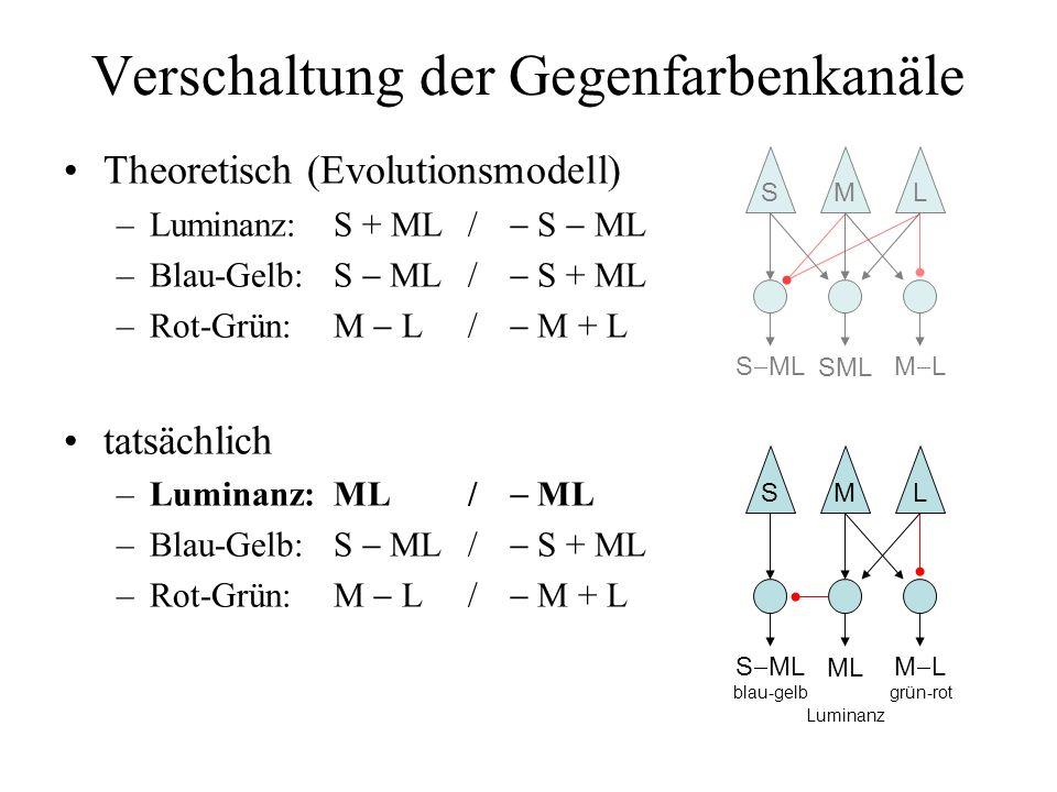 Verschaltung der Gegenfarbenkanäle Theoretisch (Evolutionsmodell) –Luminanz:S + ML/ S ML –Blau-Gelb:S ML/ S + ML –Rot-Grün:M L/ M + L tatsächlich –Luminanz:ML/ ML –Blau-Gelb:S ML/ S + ML –Rot-Grün:M L/ M + L SML S ML blau-gelb ML Luminanz M L grün-rot SML S ML M L