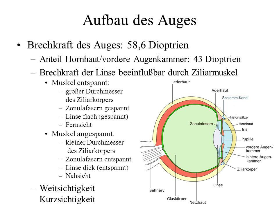 Aufbau des Auges Brechkraft des Auges: 58,6 Dioptrien –Anteil Hornhaut/vordere Augenkammer: 43 Dioptrien –Brechkraft der Linse beeinflußbar durch Ziliarmuskel Muskel entspannt: –großer Durchmesser des Ziliarkörpers –Zonulafasern gespannt –Linse flach (gespannt) –Fernsicht Muskel angespannt: –kleiner Durchmesser des Ziliarkörpers –Zonulafasern entspannt –Linse dick (entspannt) –Nahsicht –Weitsichtigkeit Kurzsichtigkeit