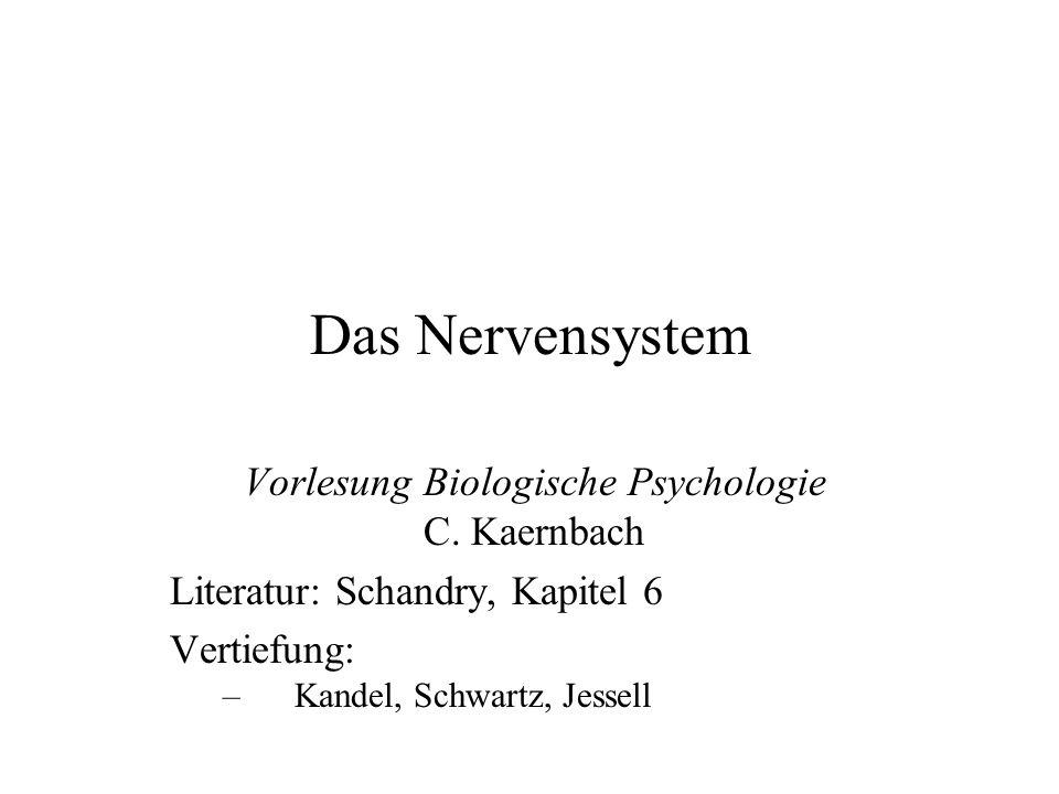 Das Nervensystem Vorlesung Biologische Psychologie C.