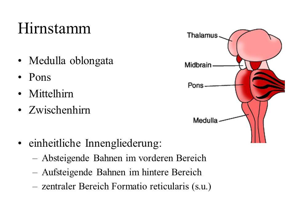 Liquorsystem innerer Liquorraum –zwei Seitenventrikel –dritter Ventrikel = Zwischenhirn –vierten Ventrikel = Rautenhirn = Medulla, Pons, Cerebellum äu
