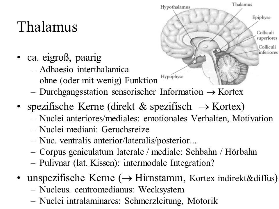 Zwischenhirn Thalamus (gr. Schlafgemach) Hypothalamus, Hypophyse Epithalamus, Epiphyse Subthalamus