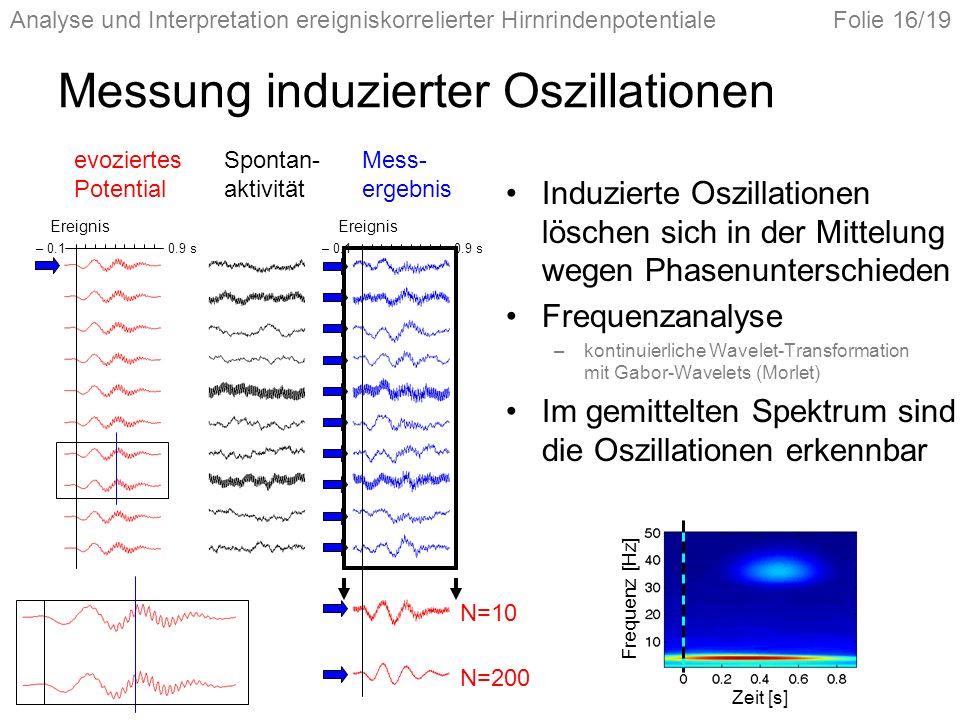 Analyse und Interpretation ereigniskorrelierter HirnrindenpotentialeFolie 16/19 Messung induzierter Oszillationen Induzierte Oszillationen löschen sich in der Mittelung wegen Phasenunterschieden Frequenzanalyse –kontinuierliche Wavelet-Transformation mit Gabor-Wavelets (Morlet) Im gemittelten Spektrum sind die Oszillationen erkennbar evoziertes Potential Spontan- aktivität Mess- ergebnis Ereignis N=10 N=200 – 0.1 0.9 s– 0.1 0.9 s Zeit [s] Frequenz [Hz]