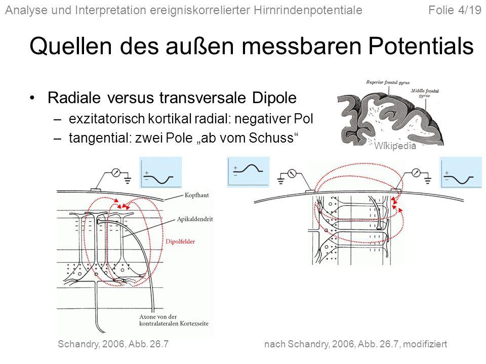 Analyse und Interpretation ereigniskorrelierter HirnrindenpotentialeFolie 4/19 Quellen des außen messbaren Potentials Radiale versus transversale Dipo