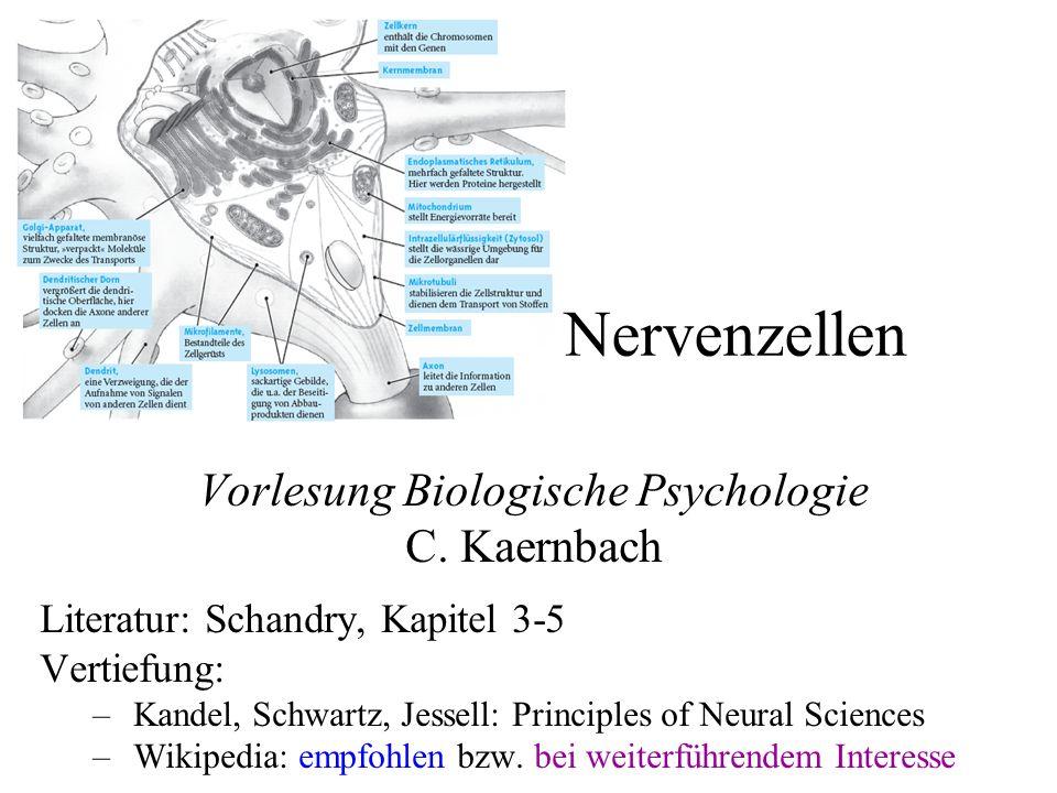 Vorlesung Biologische Psychologie C. Kaernbach Literatur: Schandry, Kapitel 3-5 Vertiefung: –Kandel, Schwartz, Jessell: Principles of Neural Sciences