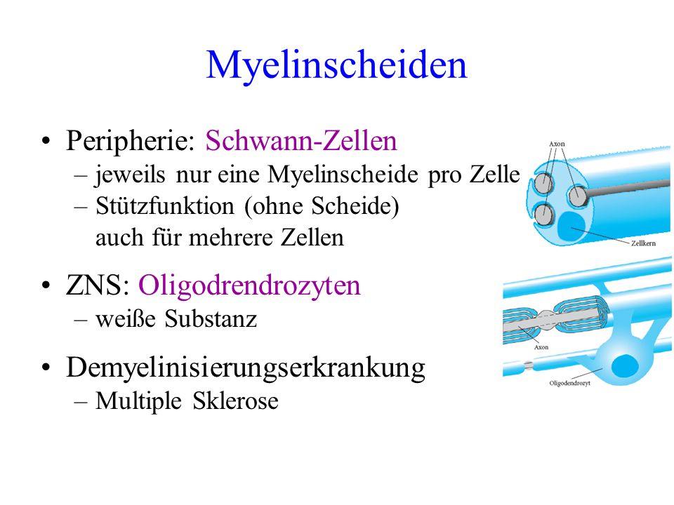 Myelinscheiden Peripherie: Schwann-Zellen –jeweils nur eine Myelinscheide pro Zelle –Stützfunktion (ohne Scheide) auch für mehrere Zellen ZNS: Oligodr