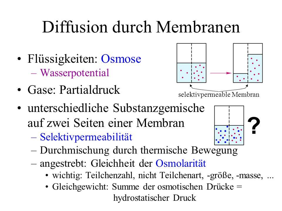 Diffusion durch Membranen Flüssigkeiten: Osmose –Wasserpotential Gase: Partialdruck unterschiedliche Substanzgemische auf zwei Seiten einer Membran –S
