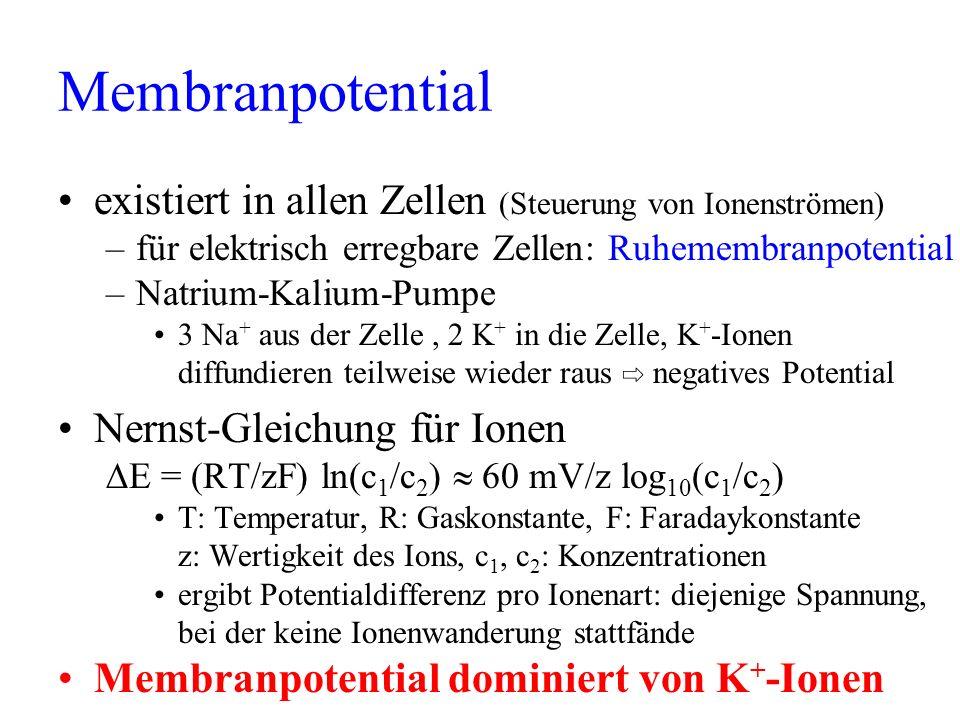 Membranpotential existiert in allen Zellen (Steuerung von Ionenströmen) –für elektrisch erregbare Zellen: Ruhemembranpotential –Natrium-Kalium-Pumpe 3