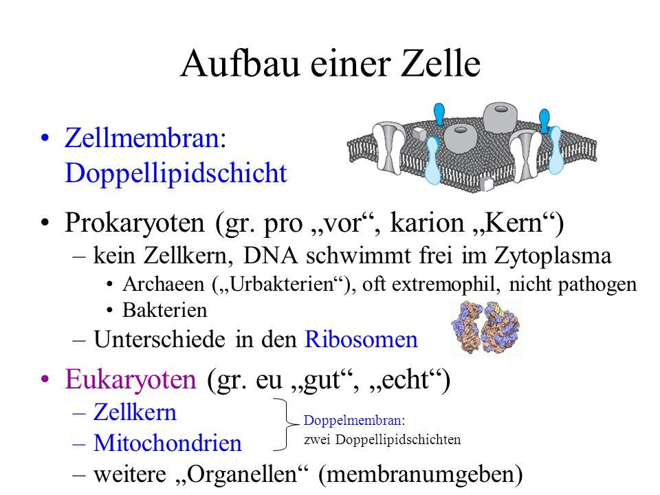 Zellmembran: Doppellipidschicht Prokaryoten (gr. pro vor, karion Kern) –kein Zellkern, DNA schwimmt frei im Zytoplasma Archaeen (Urbakterien), oft ext