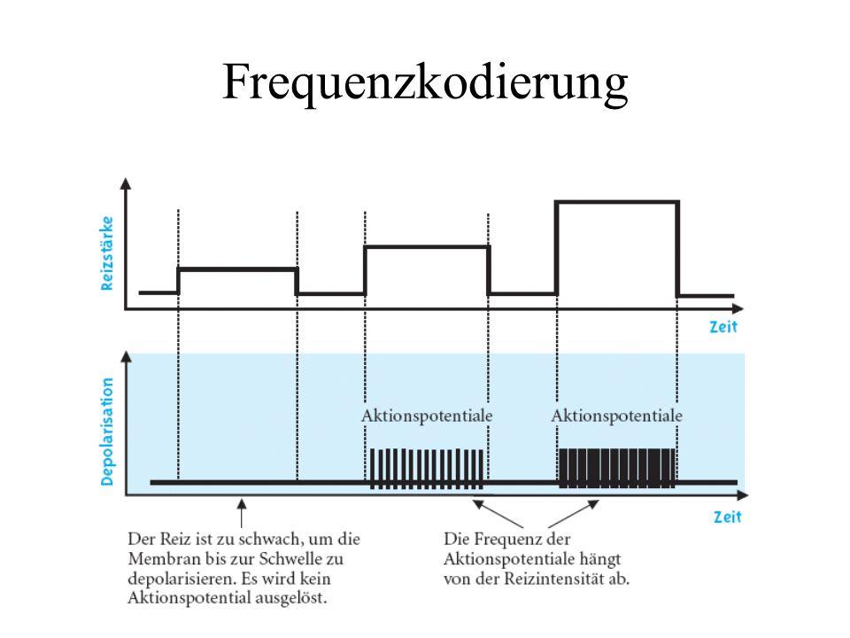 Frequenzkodierung