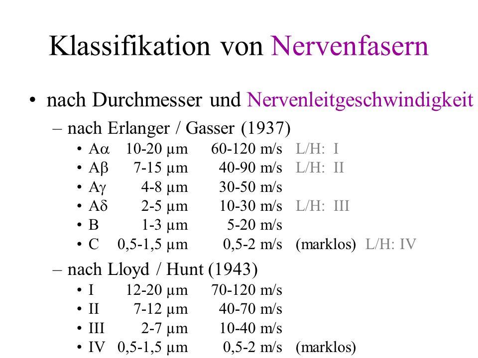 Klassifikation von Nervenfasern nach Durchmesser und Nervenleitgeschwindigkeit –nach Erlanger / Gasser (1937) A 10-20 µm60-120 m/sL/H: I A 7-15 µm40-9