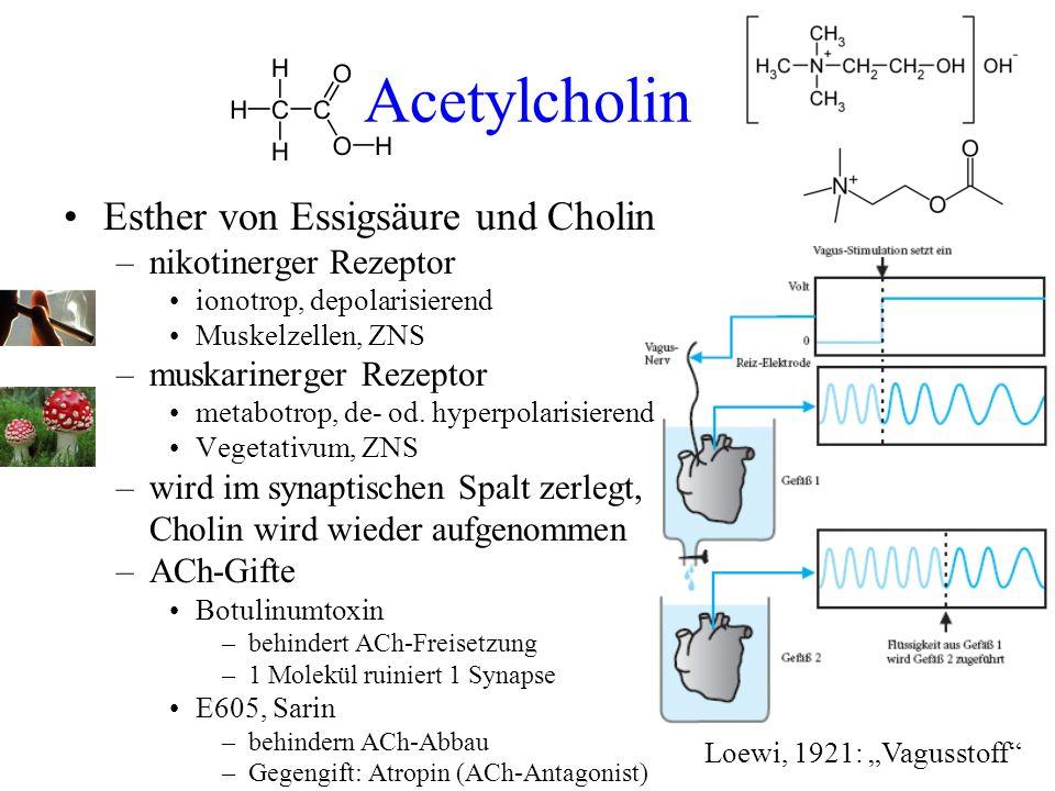Acetylcholin Esther von Essigsäure und Cholin –nikotinerger Rezeptor ionotrop, depolarisierend Muskelzellen, ZNS –muskarinerger Rezeptor metabotrop, d