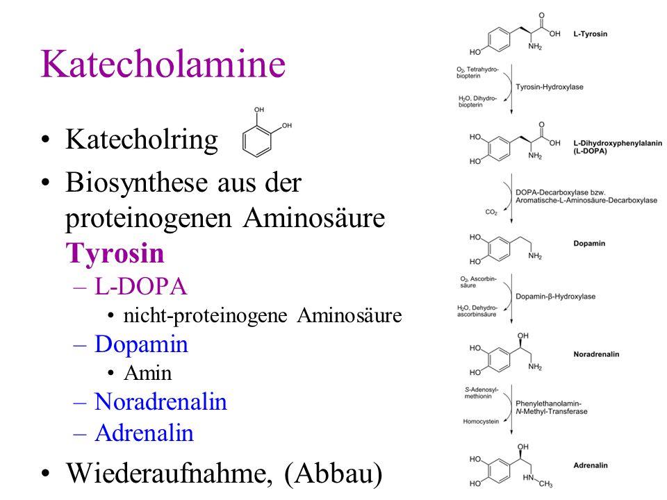 Katecholamine Katecholring Biosynthese aus der proteinogenen Aminosäure Tyrosin –L-DOPA nicht-proteinogene Aminosäure –Dopamin Amin –Noradrenalin –Adr