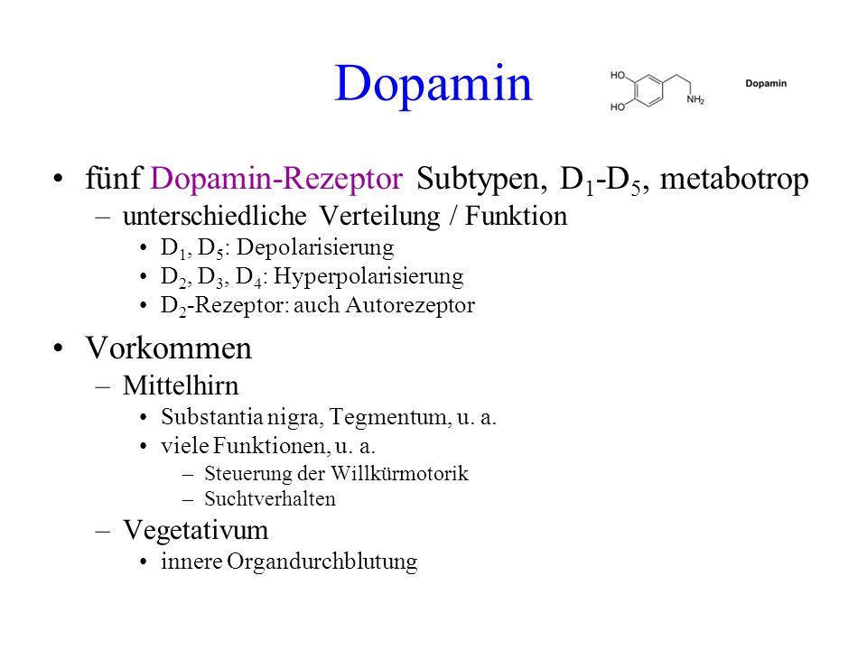 Dopamin fünf Dopamin-Rezeptor Subtypen, D 1 -D 5, metabotrop –unterschiedliche Verteilung / Funktion D 1, D 5 : Depolarisierung D 2, D 3, D 4 : Hyperp