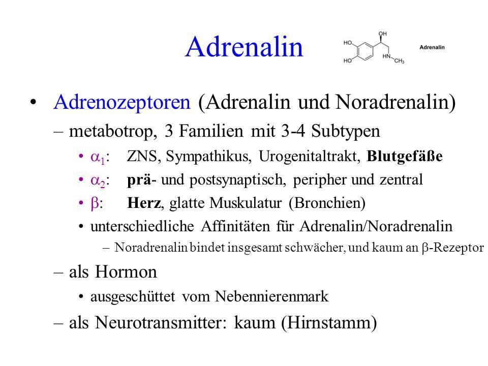 Adrenalin Adrenozeptoren (Adrenalin und Noradrenalin) –metabotrop, 3 Familien mit 3-4 Subtypen 1 :ZNS, Sympathikus, Urogenitaltrakt, Blutgefäße 2 :prä
