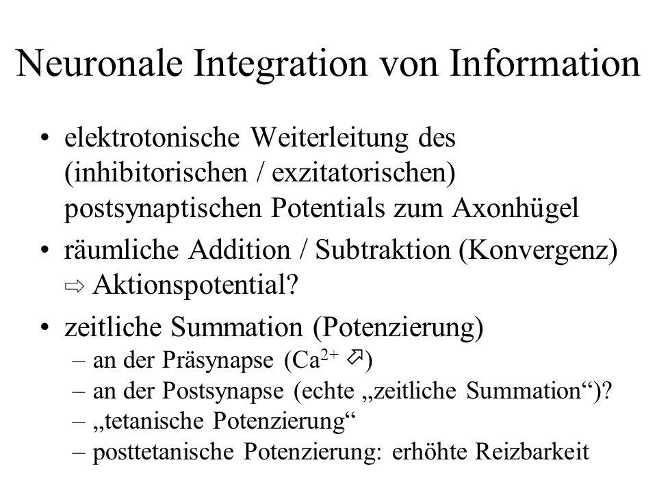 Neuronale Integration von Information elektrotonische Weiterleitung des (inhibitorischen / exzitatorischen) postsynaptischen Potentials zum Axonhügel