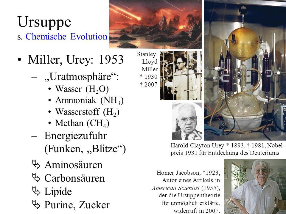 Ursuppe s. Chemische Evolution Miller, Urey: 1953 –Uratmosphäre: Wasser (H 2 O) Ammoniak (NH 3 ) Wasserstoff (H 2 ) Methan (CH 4 ) –Energiezufuhr (Fun