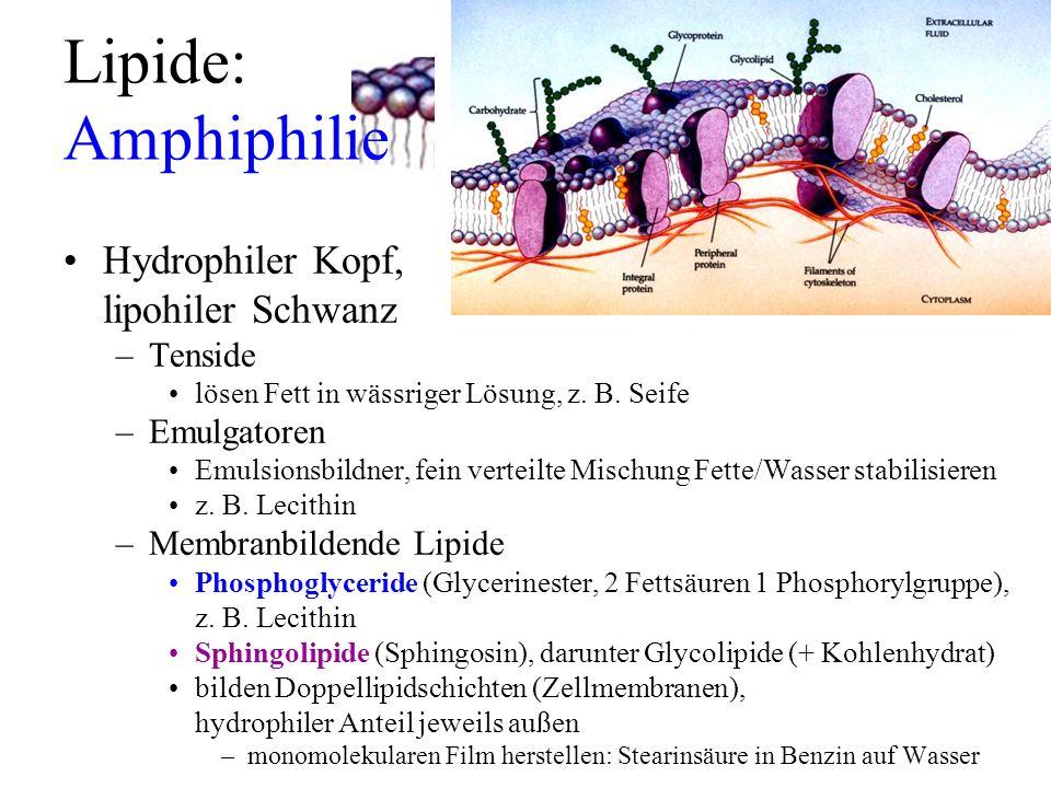 Lipide: Amphiphilie Hydrophiler Kopf, lipohiler Schwanz –Tenside lösen Fett in wässriger Lösung, z. B. Seife –Emulgatoren Emulsionsbildner, fein verte