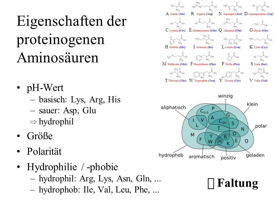 Eigenschaften der proteinogenen Aminosäuren pH-Wert –basisch: Lys, Arg, His –sauer: Asp, Glu hydrophil Größe Polarität Hydrophilie / -phobie –hydrophi