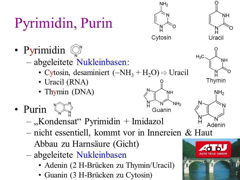 Pyrimidin –abgeleitete Nukleinbasen: Cytosin, desaminiert ( NH 3 + H 2 O) Uracil Uracil (RNA) Thymin (DNA) Purin –Kondensat Pyrimidin + Imidazol –nich