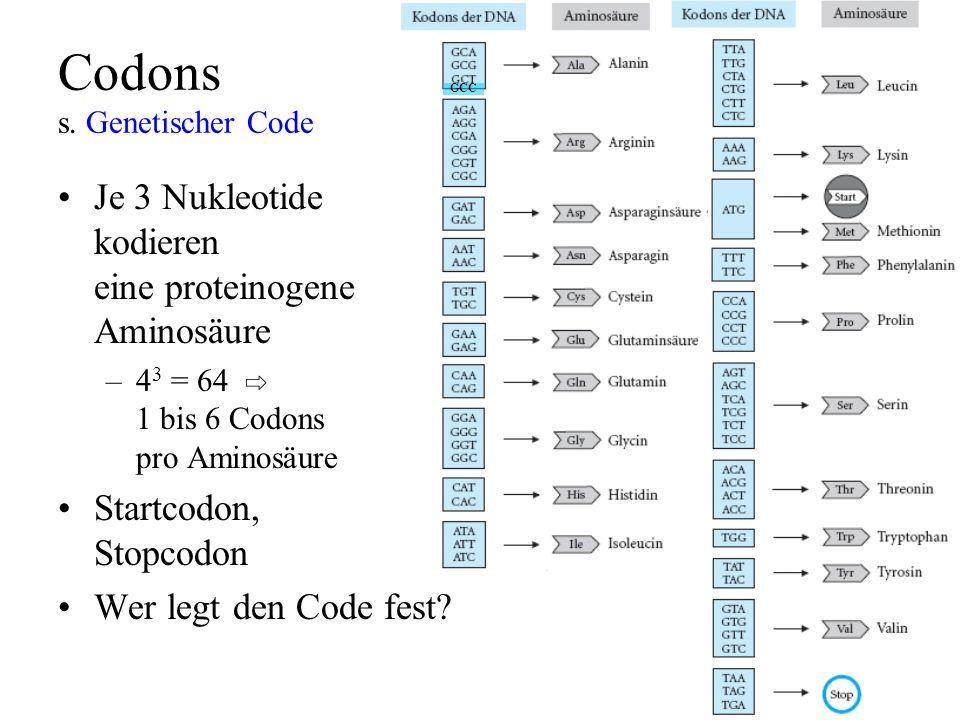 Codons s. Genetischer Code Je 3 Nukleotide kodieren eine proteinogene Aminosäure –4 3 = 64 1 bis 6 Codons pro Aminosäure Startcodon, Stopcodon Wer leg