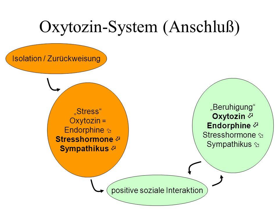 Oxytozin-System (Anschluß) Beruhigung Oxytozin Endorphine Stresshormone Sympathikus Stress Oxytozin = Endorphine Stresshormone Sympathikus positive so