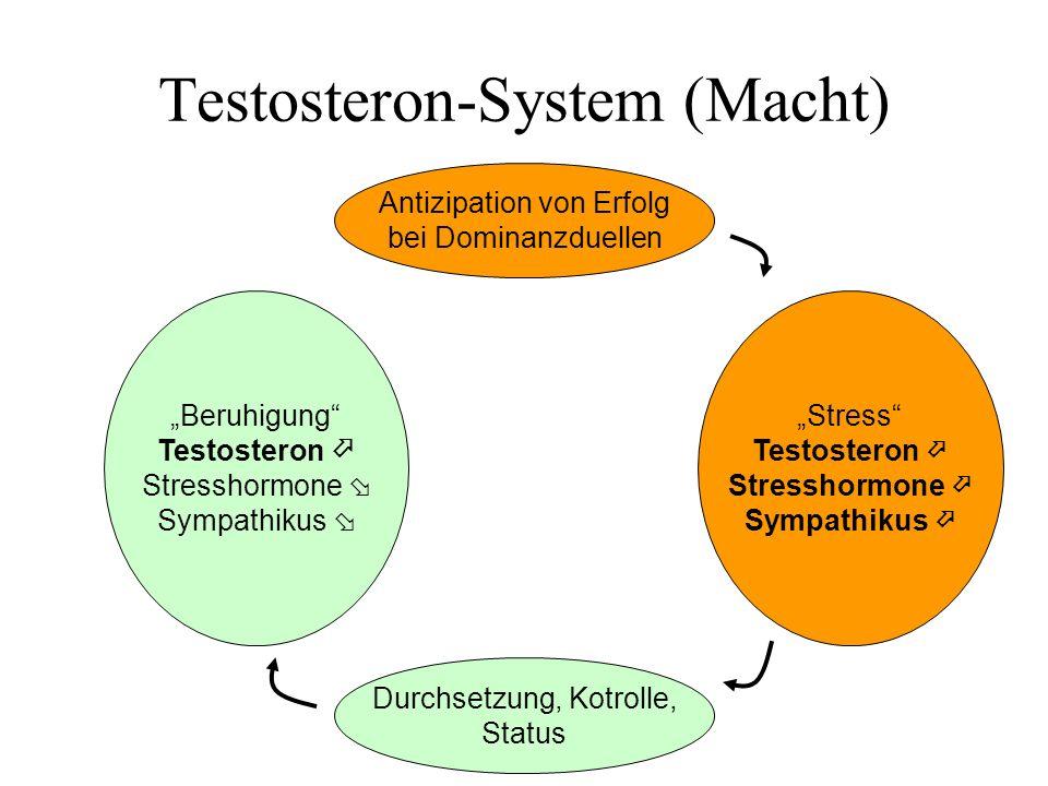 Testosteron-System (Macht) Beruhigung Testosteron Stresshormone Sympathikus Stress Testosteron Stresshormone Sympathikus Durchsetzung, Kotrolle, Statu