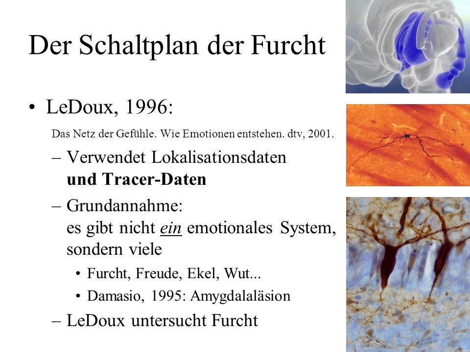 Das limbische System MacLean, 1952: Erweiterung –Rückgriff auf Broca –spekulativ, keine Tracer-Daten