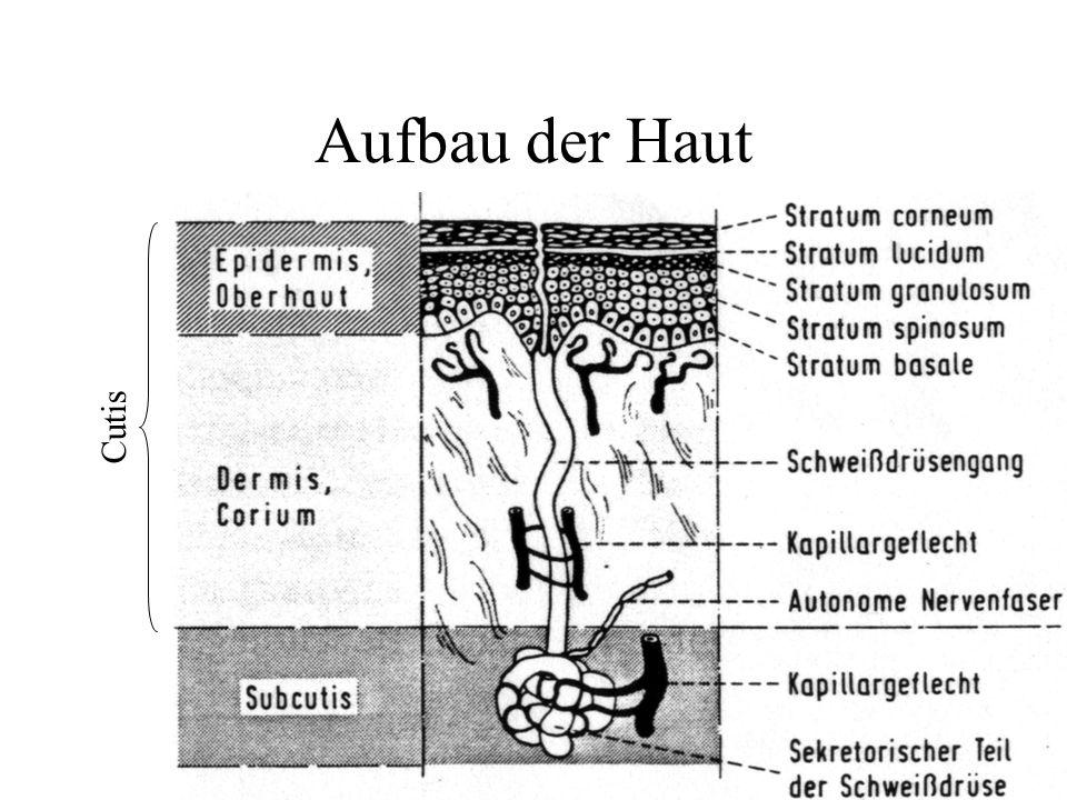 EDA - Terminologie HautpotentialreaktionSPRSkin Potential Response HautpotentialniveauSPLSkin Potential Level HautwiderstandsreaktionSRRSkin Resistanc