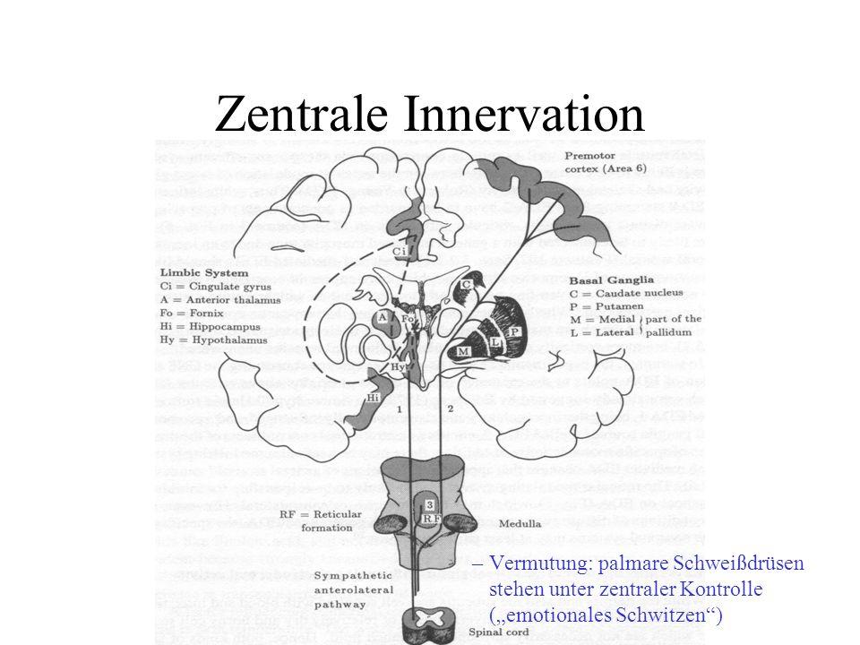 Schweißdrüsen Schweißdrüsen sind exokrine Drüsen. Innervation: autonomes Nervensystem ekkrine vs. apokrine Drüsen –ekkrin: Ausscheidung mittels Vesikl