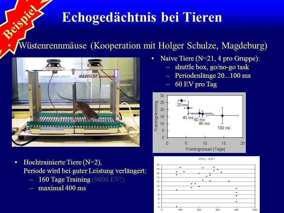 Beispiel Echogedächtnis bei Tieren Wüstenrennmäuse (Kooperation mit Holger Schulze, Magdeburg) Naive Tiere (N=21, 4 pro Gruppe): –shuttle box, go/no-g