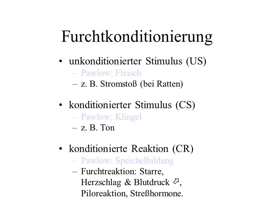 Furchtkonditionierung unkonditionierter Stimulus (US) –Pawlow: Fleisch –z. B. Stromstoß (bei Ratten) konditionierter Stimulus (CS) –Pawlow: Klingel –z
