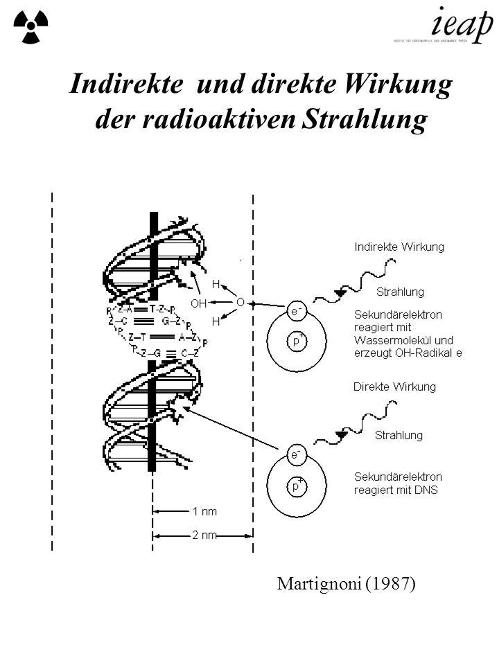 Indirekte und direkte Wirkung der radioaktiven Strahlung Martignoni (1987)