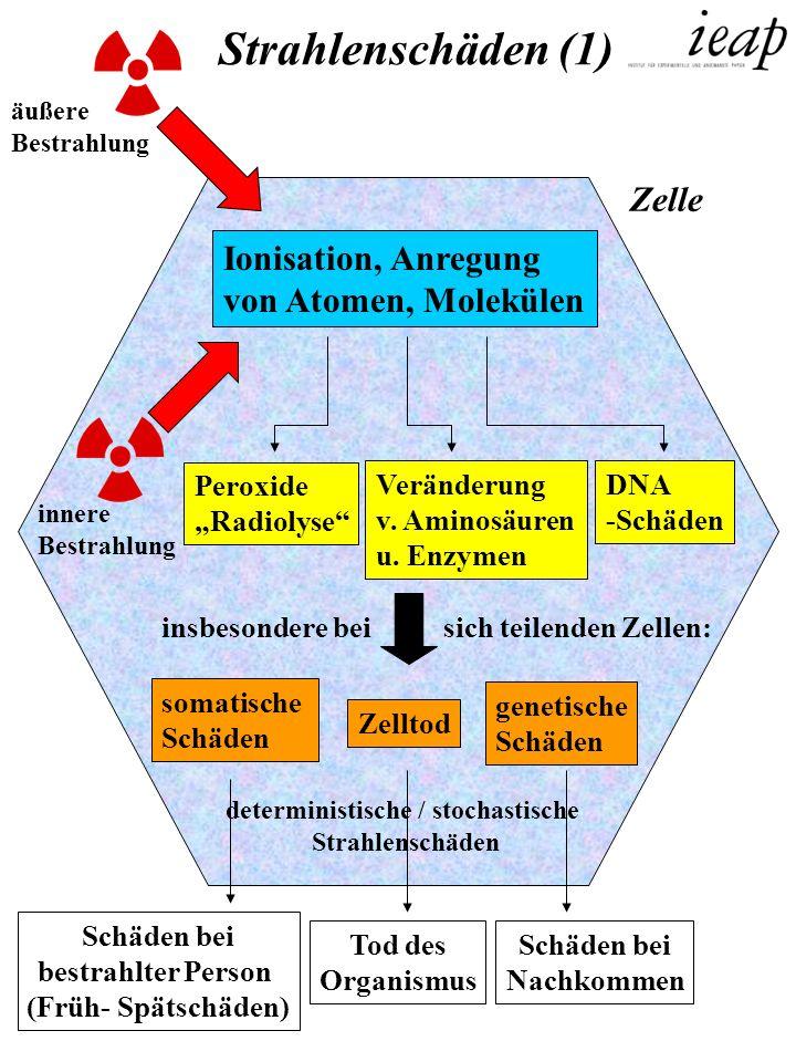 äußere Bestrahlung innere Bestrahlung Ionisation, Anregung von Atomen, Molekülen Peroxide Radiolyse Veränderung v. Aminosäuren u. Enzymen DNA -Schäden