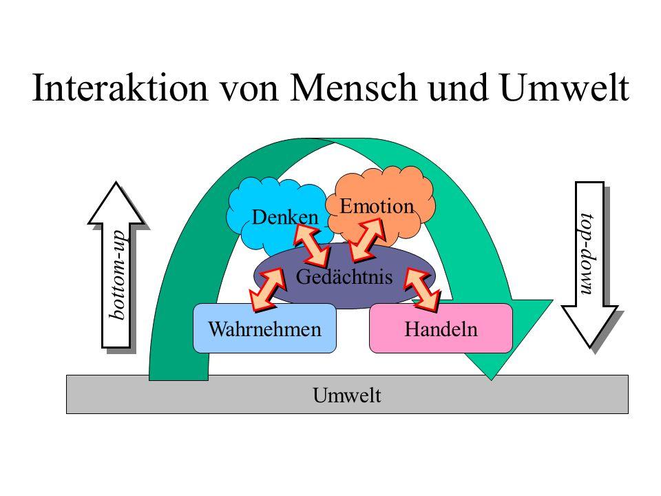 Umwelt Interaktion von Mensch und Umwelt Denken Emotion Gedächtnis WahrnehmenHandeln top-down bottom-up