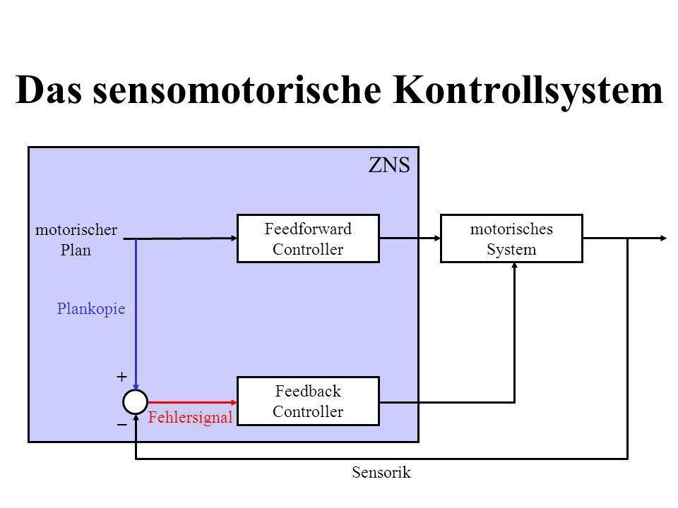 Das sensomotorische Kontrollsystem motorischer Plan Feedback Controller Fehlersignal motorisches System Feedforward Controller Plankopie + – Sensorik