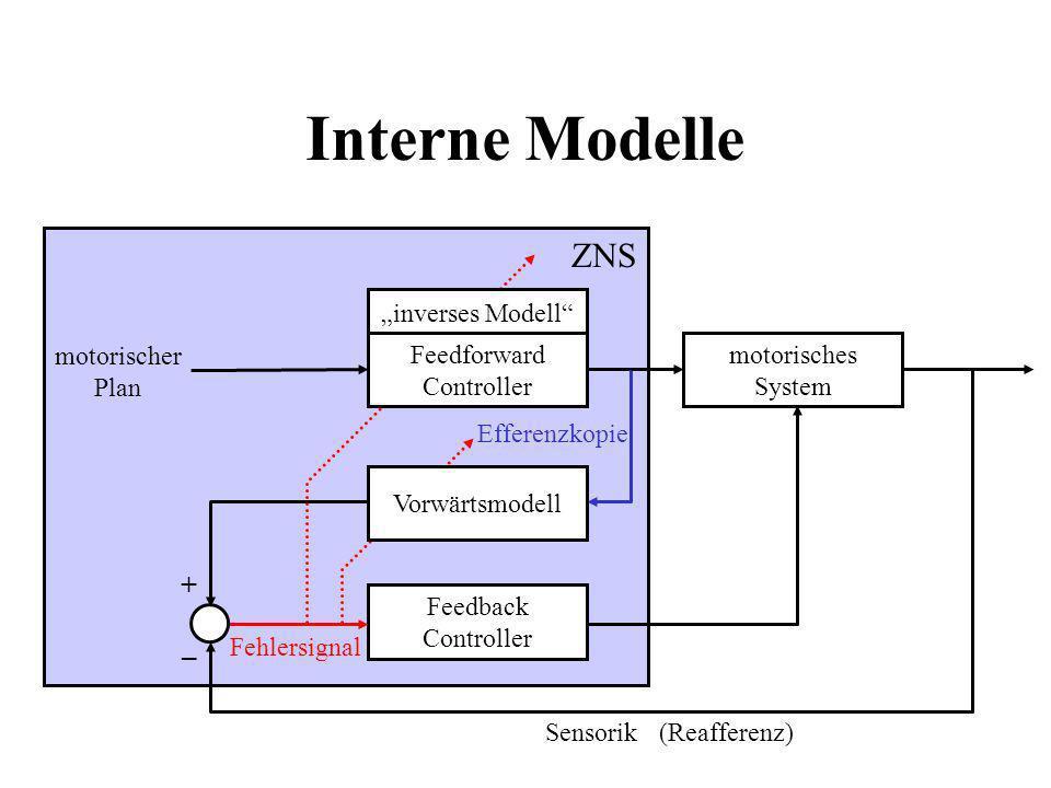 Interne Modelle ZNS motorischer Plan motorisches System Feedback Controller + – Fehlersignal Efferenzkopie Sensorik Vorwärtsmodell inverses Modell Fee