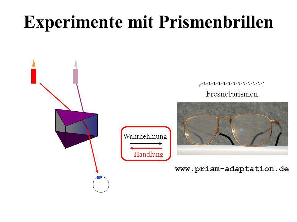 Experimente mit Prismenbrillen ؤ ت و ك ز ظ غ ن ه ى د ج Handlung Wahrnehmung Handlung Wahrnehmung ??.