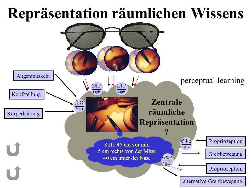 ° ° ° ° ° ° Repräsentation räumlichen Wissens Augenmuskeln Kopfstellung Körperhaltung Greifbewegung Zentrale räumliche Repräsentation ? alternative Gr
