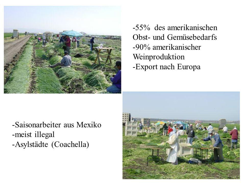 -55% des amerikanischen Obst- und Gemüsebedarfs -90% amerikanischer Weinproduktion -Export nach Europa -Saisonarbeiter aus Mexiko -meist illegal -Asyl