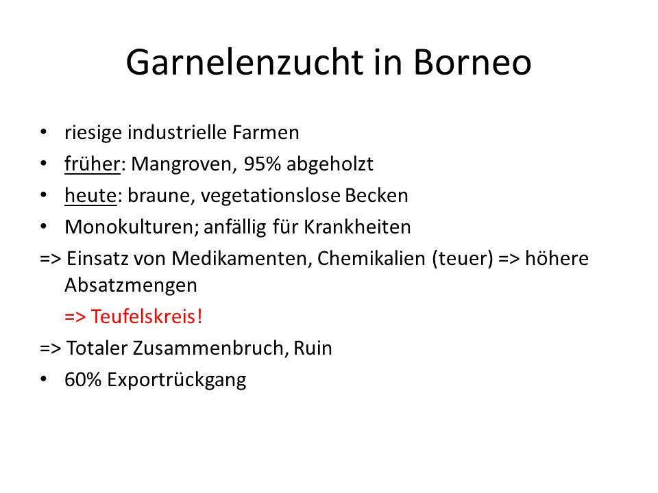 Garnelenzucht in Borneo riesige industrielle Farmen früher: Mangroven, 95% abgeholzt heute: braune, vegetationslose Becken Monokulturen; anfällig für