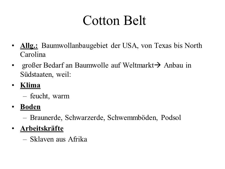 Cotton Belt Allg.: Baumwollanbaugebiet der USA, von Texas bis North Carolina großer Bedarf an Baumwolle auf Weltmarkt Anbau in Südstaaten, weil: Klima