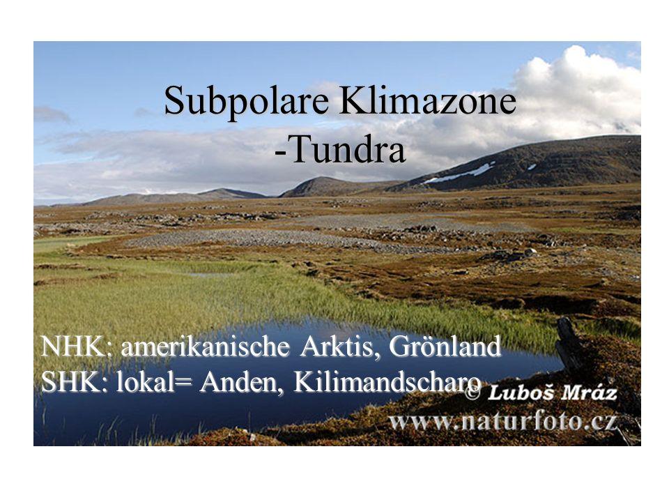 Subpolare Klimazone -Tundra NHK: amerikanische Arktis, Grönland SHK: lokal= Anden, Kilimandscharo